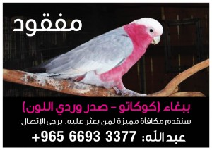 Lost Bird: Cockatoo - ببغاء مفقود