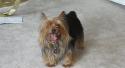 Lost dog - كلب مفقود