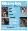 Missing Dog - Hachi - كلب مفقود: هاتشي